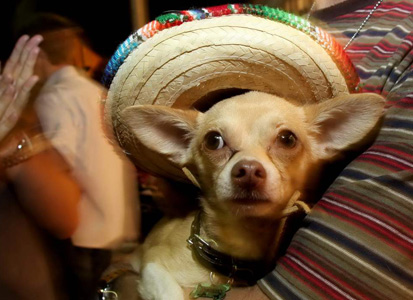 Here is the longest list of places to celebrate Cinco de Mayo in South Florida. Do you need more?